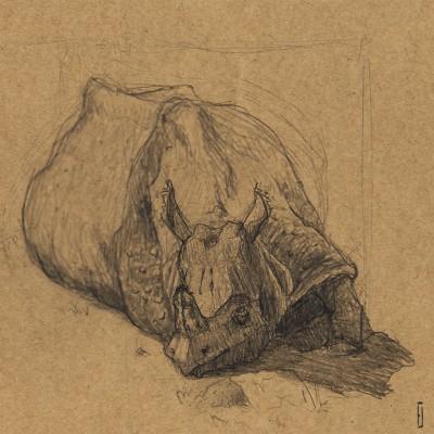 rhino_nashorn_sonnenbaden_napping_zoo